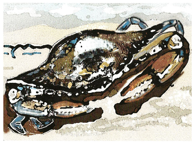 Living on the Mississippi Gulf Coast inspires creative ways to paint sea life. This is called