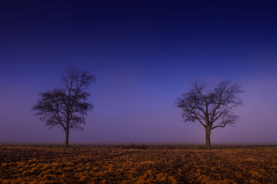 Twin Trees at Sunrise in the Mississippi Delta